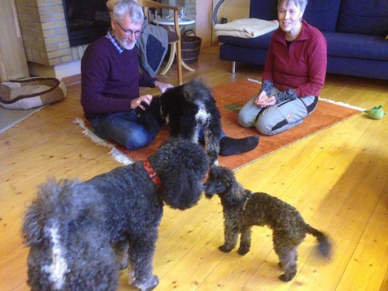Lizzy bei ihrem ersten Besuch - Mütze und Avani haben sie gleich gut aufgenommen. Das hat uns und vor allem auch Helene und Klaus sehr gefreut!
