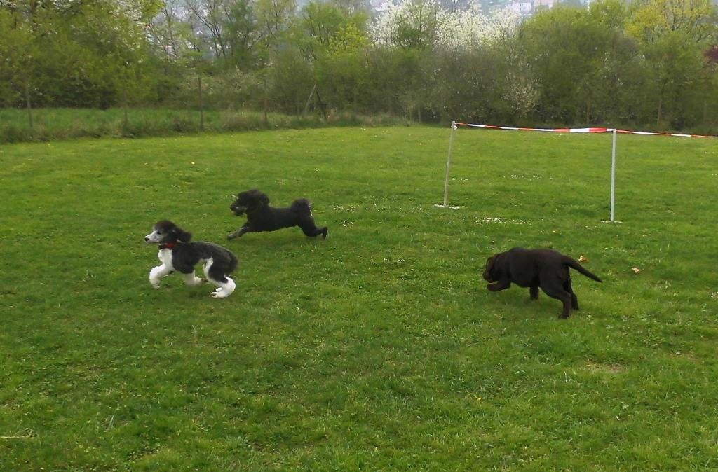 Muetze rennt mit Nelson und Bruno