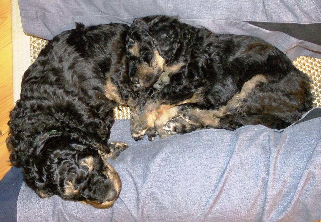 """Und denn fallen sie von jetzt auf gleich in Tiefschlaf - hier die """"Zwillinge"""" Asterix und Avani :-)"""