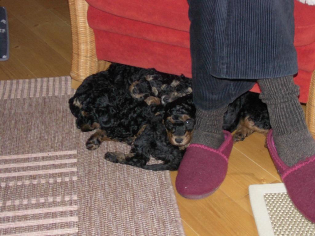 Bei Frauchens Hausschuhen und Füßen auch