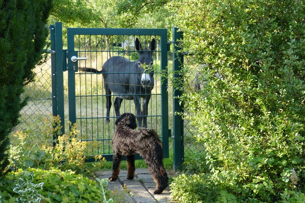 Paul und sein Nachbar, der Esel