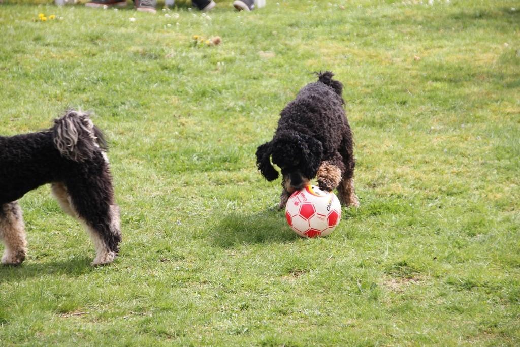 Beim Fußballspielen - die, die stört, ist Avani - wer sonst?