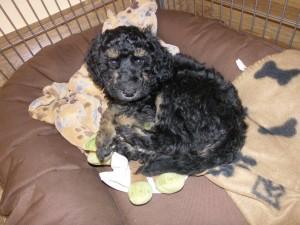 Bruni kann toben wie doll - und dann zieht sie sich raus und schläft ne Runde :-)