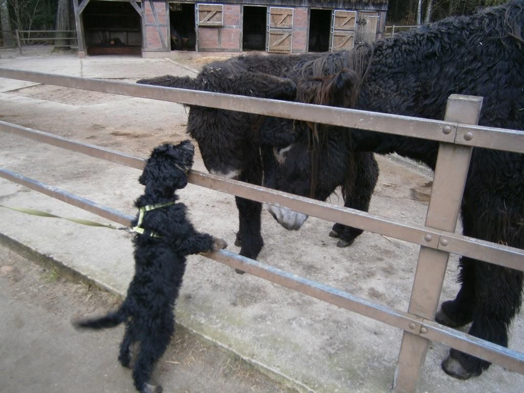 Beppo und die Esel